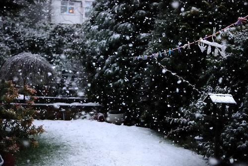 090206 Snow Fall