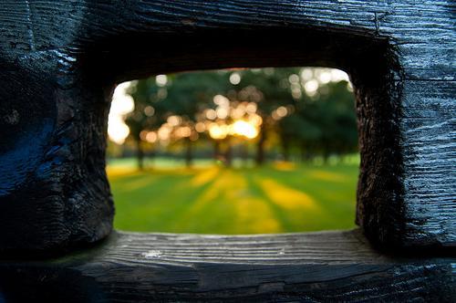 A Peek into the Park