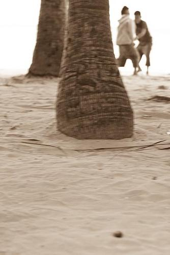 Boys playing beneath the coconut tree