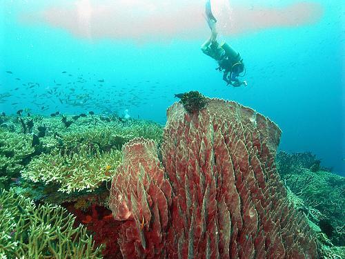 barrel sponge kimbe bay