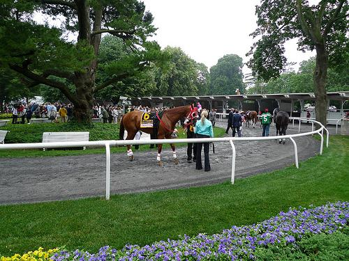 2011 Belmont Stakes - Khan of Khans in the Paddock