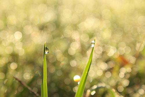 Dewdrop in the morning