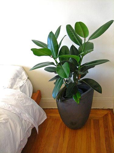 New Plant! Yes!